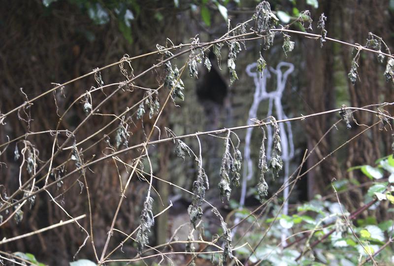 cotton, wire