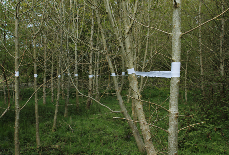 Anglesey, alder trees, cotton, land art.